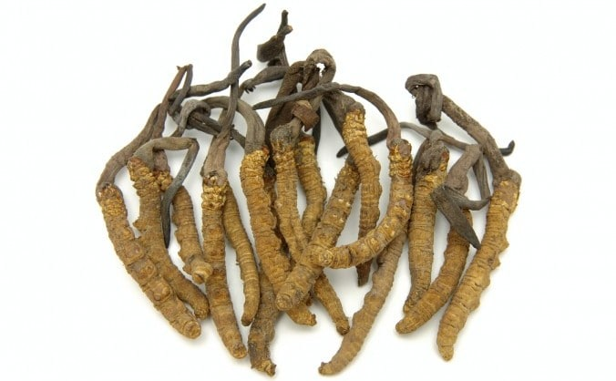 Cordiceps ciuperca tibetana
